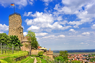 The Wachtenburg castle surrounded by vineyards overlooking the Rhine Valley, Wachenheim, Naturpark Pfaelzerwald nature reserve, Palatinate, Rhineland-Palatinate, Germany, Europe