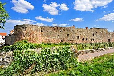 Old town walls on the Stadtmauerrundweg circular track, Wachenheim, Naturpark Pfaelzerwald nature reserve, Palatinate, Rhineland-Palatinate, Germany, Europe