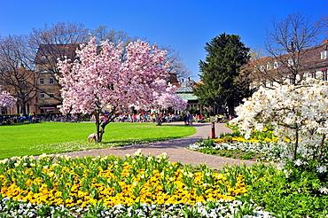 City park, Ettlingen, Germany, Black Forest, Baden-Wuerttemberg, Germany, Europe