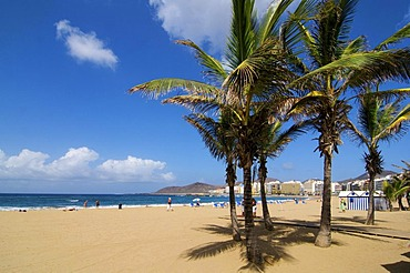 Playa de las Canteras beach in Las Palmas, Grand Canary, Canary Islands, Spain
