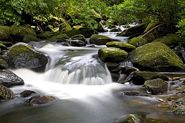 Waterfall in Killarney National Park, Killarney, County Kerry, Munster, Ireland, Europe