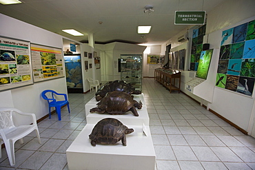 Natural History Museum on Independence Avenue, capital of Victoria, Mahe Island, Seychelles, Indian Ocean, Africa
