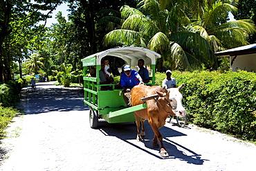 Oxcart, La Digue Island, Seychelles, Indian Ocean, Africa