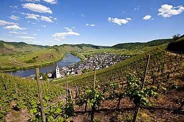 View on to the Moselle River loop near the town of Bremm, district of Cochem-Zell, Mosel, Rhineland-Palatinate, Germany, Europe