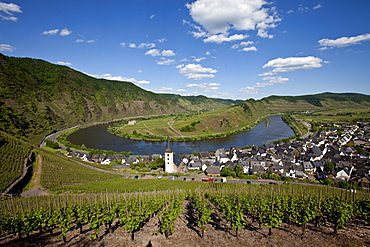 View on to the Moselle River loop near the town of Bremm, district of Cochem-Zell, Moselle, Rhineland-Palatinate, Germany, Europe