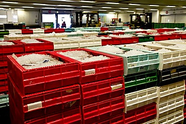The Fish auction room in Hanstholm, Denmark