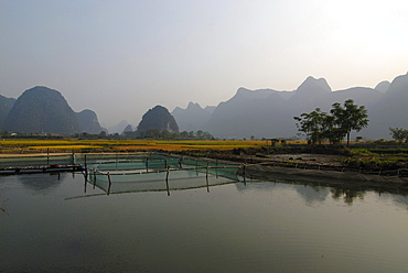 Fish farming pond near Yangshuo at Yulong River in front of trees and karst rocks, Yangshuo, Guilin, Guanxi, China, Asia