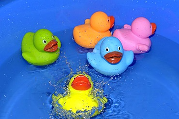 Five colourful rubber ducks floating in water