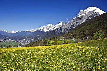View of the Inntal valley, Telfs, Mt. Hohe Munde, Mieminger mountain range, dandelion meadow, spring, Tyrol, Austria, Europe