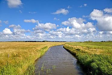 Landscape near Morsum, Sylt, North Frisia, Schleswig-Holstein, Germany, Europe