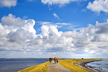 Causeway at Rantumbecken nature reserve, Sylt, North Frisia, Schleswig-Holstein, Germany, Europe