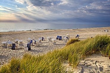 Dunes and roofed wicker beach chairs near Kampen, Sylt, North Frisia, Schleswig-Holstein, Germany, Europe