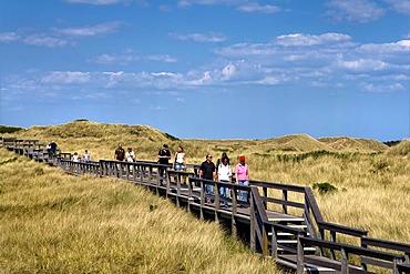 Wooden walkway through a dune landscape, Wenningstedt, North Frisia, Schleswig-Holstein, Germany, Europe