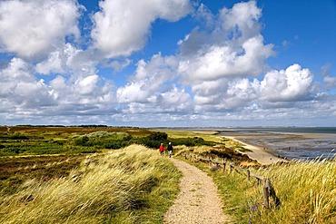 Braderup heath, Braderup, Sylt, North Frisia, Schleswig-Holstein, Germany, Europe