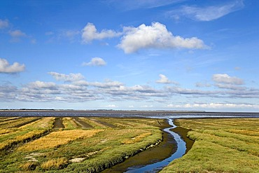 Salt marsh near Norddorf, Amrum, North Frisia, Schleswig-Holstein, Germany, Europe