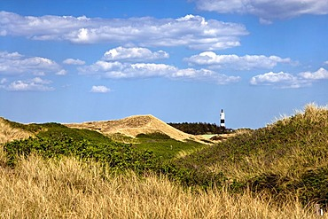 Dune landscape with a lighthouse on the Rotes Kliff cliff, Wenningstedt, North Frisia, Schleswig-Holstein, Germany, Europe