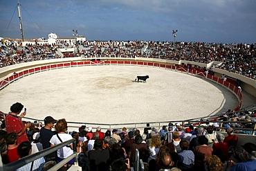 Bullfighting arena in Saintes-Maries-de-la-Mer, Camargue, Southern France, France, Europe
