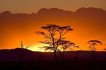 Sunset with silhouette of Acacia trees at Seronera Serengeti, Tanzania, Africa