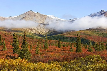 Denali National Park in autumn, Alaska, USA, North America