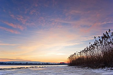 Frozen lake, red evening light, Reed (Phragmites communis), Lake Constance, Markelfingen, Radolfzell, County of Constance, Baden-Wurttemberg, Germany, Europe