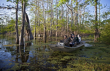 Tourists visit a cypress-tupelo forest in the Atchafalaya River Basin, Bayou Sorrel, Louisiana, USA