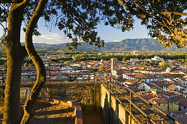 Lookout terrace on the Tower Torre Guinigi overlooking Lucca, Tuscany, Italy