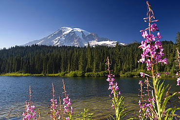 Reflection Lakes with Mount Rainier, Mount Rainier National Park, Washington, USA