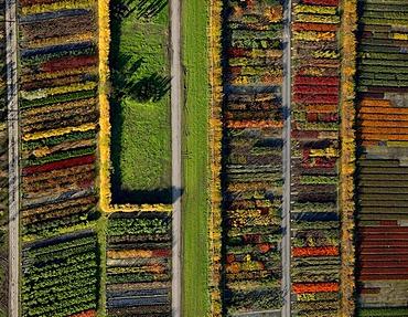 Aerial view, gardening, arboretum, Datteln-Horneburg, Recklinghausen, North Rhine-Westphalia, Germany, Europe