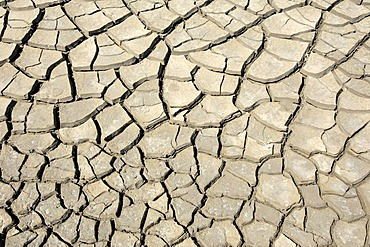 Dried out earth, Camargue, Provence, Southern France, France, Europe