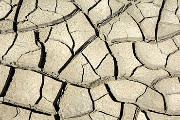 Parched ground, Camargue, Provence, Southern France, France, Europe