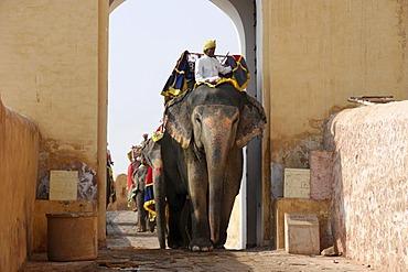 Elephants at Amber Palace, Rajasthan, North India, Asia