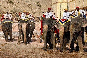 Riding on elephants to the Fort Amber Palace, Amber, Rajasthan, North India, Asia
