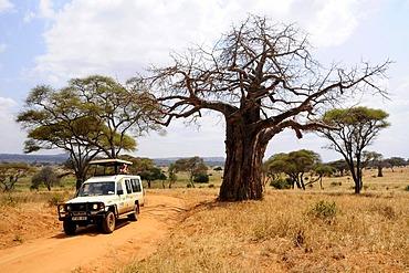 Four wheel drive vehicle with tourists on safari under a Baobab tree (Adansonia digitata), Tarangire-National Park, Tanzania, Africa
