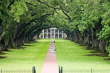 Path below old oak trees leading to the Oak Alley Plantation on Mississippi, Louisiana, USA