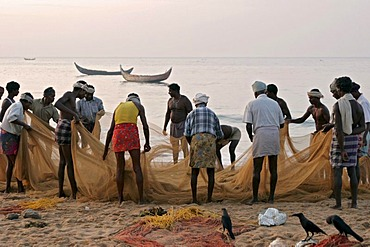 Fishermen drawing in their net in the early morning at the beach south of Kovalam, Kerala, India, Asia