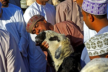 A potential buyer inspecting a sheep at the goat market, Nizwa, Sultanate of Oman, Middle East