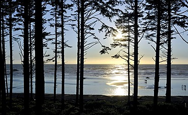 View of Rialto Beach near Mora through a forest, Olympic National Park, Washington, USA, North America