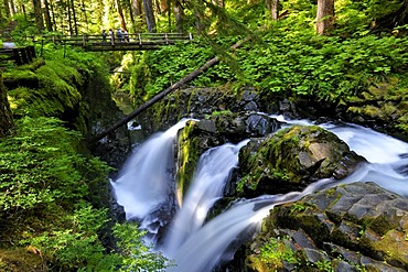 Sole Duc Falls, waterfall, tourist attraction, Olympic Peninsula, Nationalpark, Washington, USA, North America