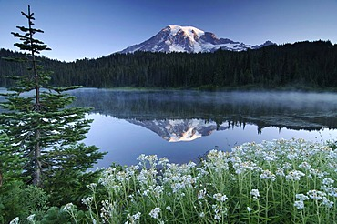 Mount Rainier reflected in a lake, flower meadow at front, Mount Rainier National Park, Washington, USA, North America