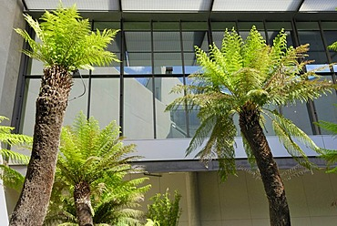 Palms and reflections in a courtyard of the National Gallery, Canberra, Australia