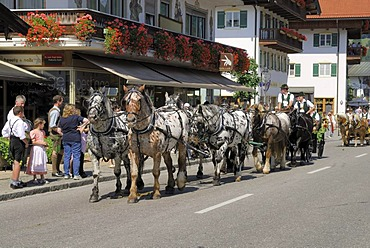 Carriage and six Noriker horses at Rottacher Rosstag festival, Rottach-Egern at Lake Tegern, Upper Bavaria, Germany, Europe