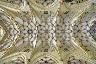 Interior view of reticulated or stellar vaulting on nave, Alexander Church, Alexanderkirche, Marbach am Neckar, Baden-Wuerttemberg, Germany, Europe