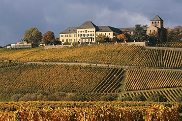 Winery Schloss Johannisberg above the autumnal coloured vineyards near Geisenheim, Rheingau, Rhine District, UNESCO World Heritage Site, Middle Rhine Valley, Hesse, Germany, Europe
