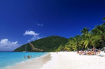 Palm trees on a beach, White Bay, Jost Van Dyke Island, British Virgin Islands, Caribbean