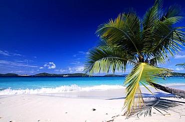 Palm tree on a beach, Solomon Bay, St. John Island, United States Virgin Islands, Caribbean