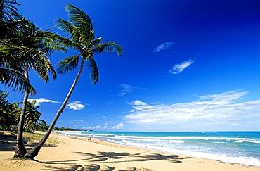 Beach with palm trees, Coco Beach near Rio Grande, Puerto Rico, Caribbean