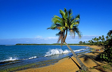 Beach with palm trees, Tres Palmitas Beach near Loiza, Puerto Rico, Caribbean