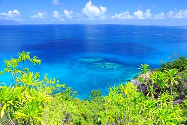 Tropical vegetation in front of the ocean, northwest coast, Mahe, Seychelles