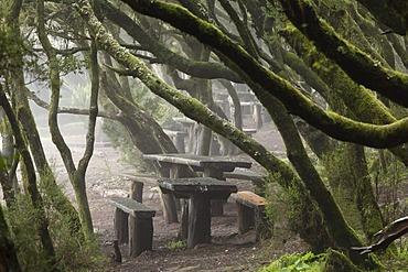 Laguna Grande resting place in a cloud forest, Garajonay National Park, La Gomera, Canary Islands, Spain, Europe