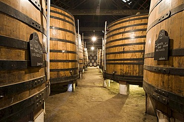 Oak barrels filled with port wine of Graham's Port Wine House on Rua Rei Ramiro, Vila Nova Gaia, Porto, UNESCO World Cultural Heritage Site, Portugal, Europe - Propertyrights www.symington.com JD@symington.com